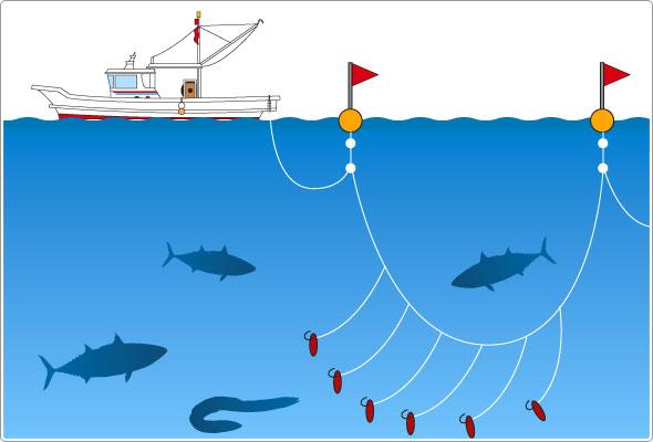 延縄 レシピ 漁法 漁法:延縄 1本の長いロープに針をたくさん垂らして魚を釣る方法。マグロなどで